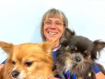 canine dental, anesthesia free dental cleaning for dogs Melbourne